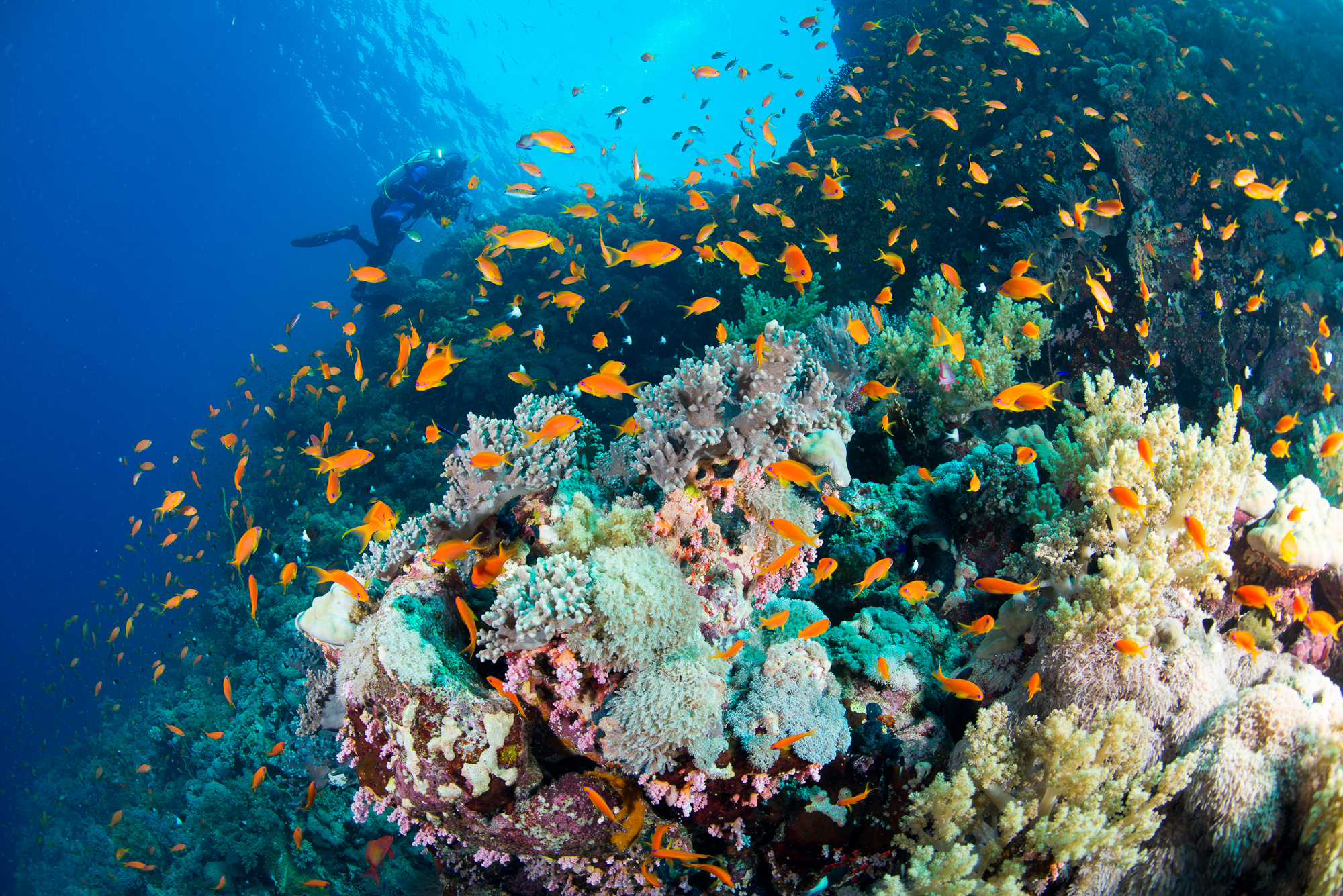 Red Sea Biodiversity Survey, Research from the Academy