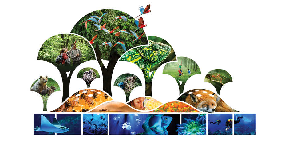 Graphical illustration of forest canopy, hills, and ocean with animals and humans