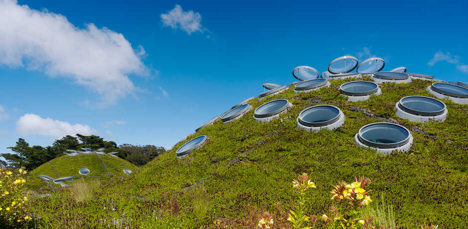 The lush green living roof of the California Academy of Sciences. Photo by Tim Griffith