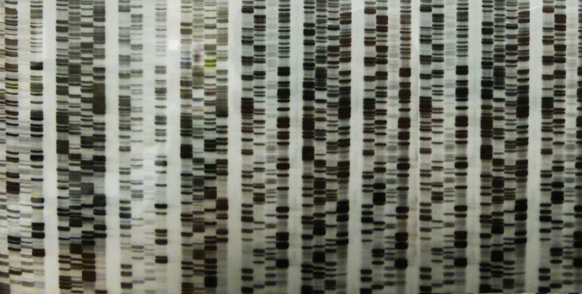 1996 Autorad from manual Sanger sequencing