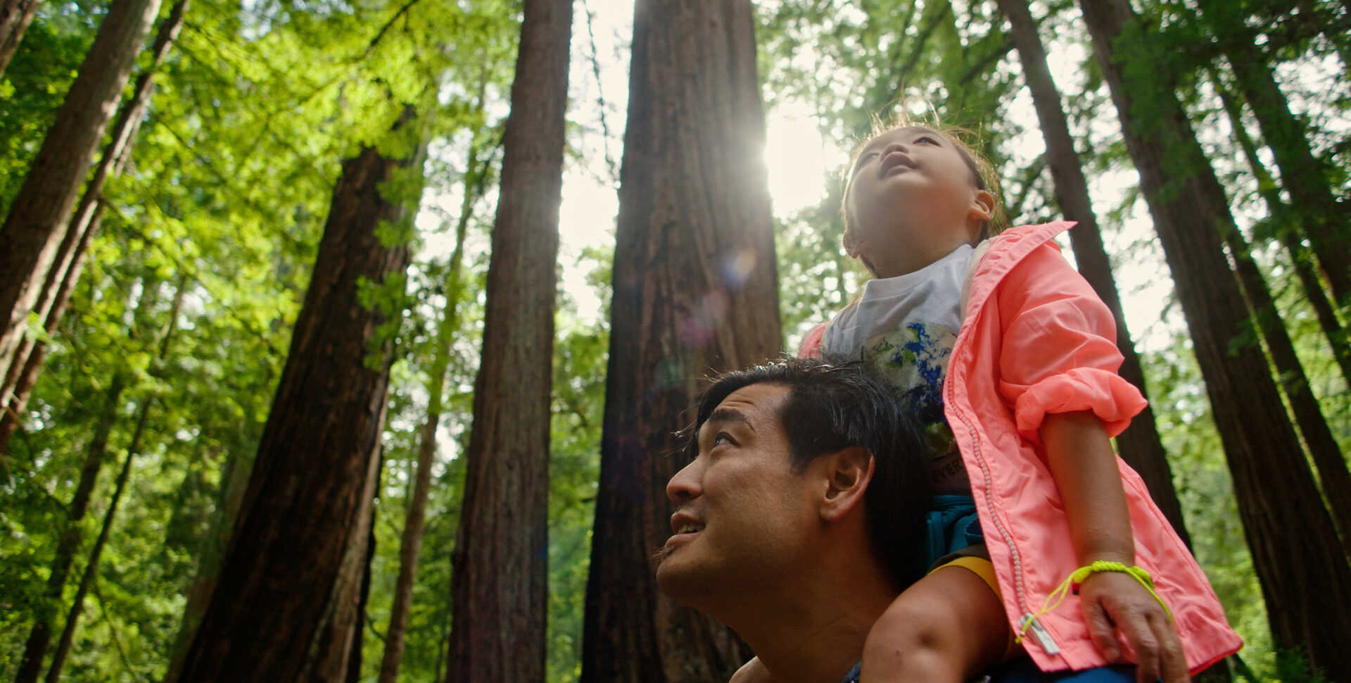 A young girl sits on man's shoulders in sun-dappled redwood forest