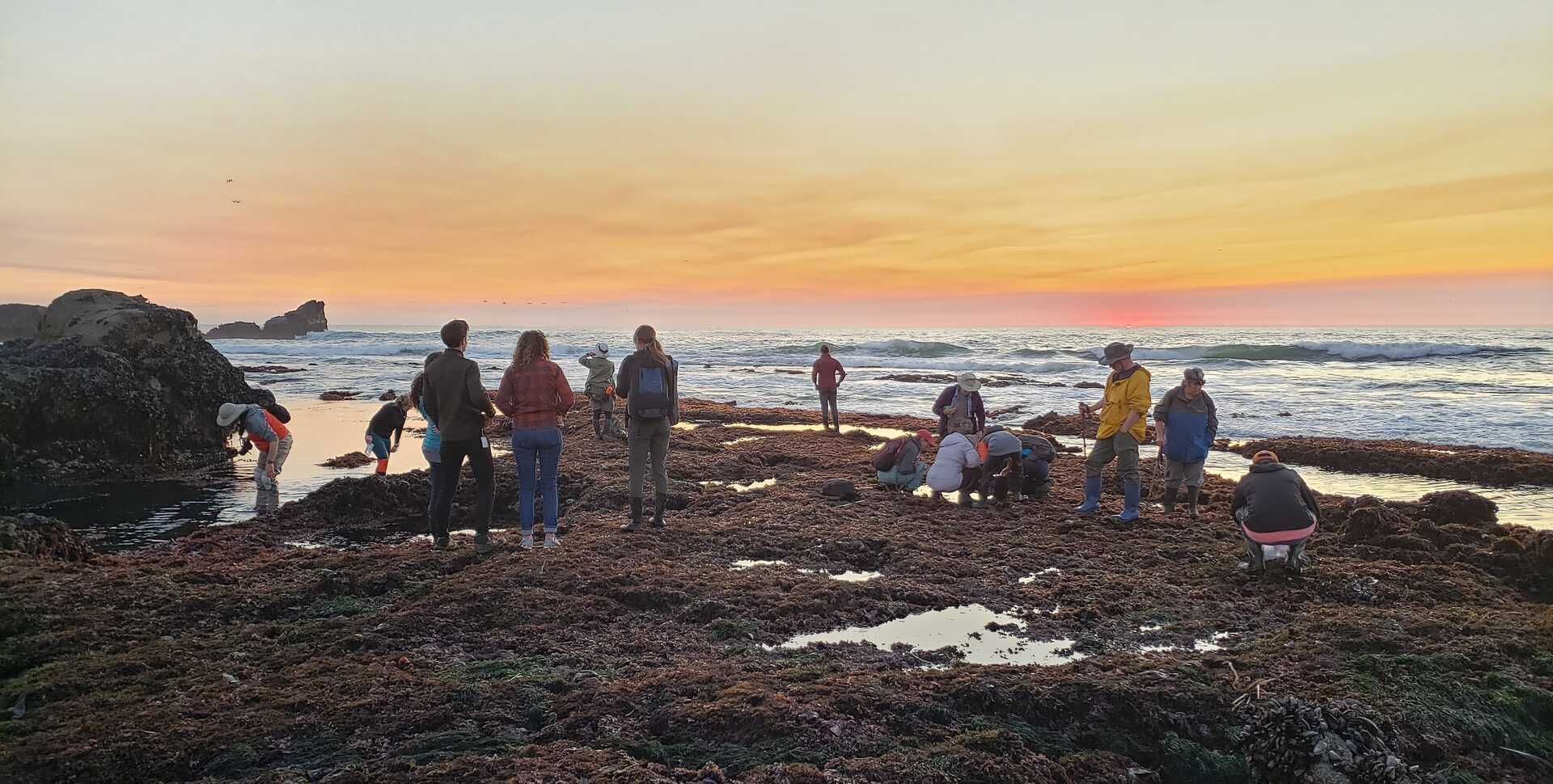 Sunset during a tidepool bioblitz in Northern California
