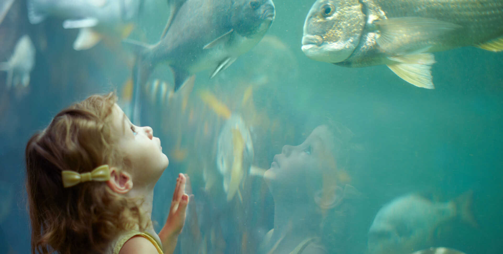 Young girl gazes up in awe at a large fish in the California Coast exhibit