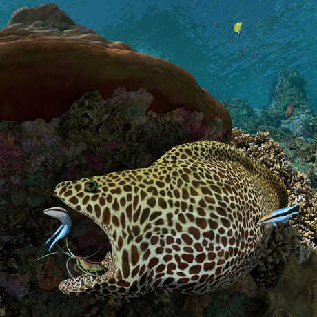 Expedition Reef calacademy morrison planetarium