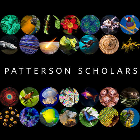 Patterson Scholars graphic