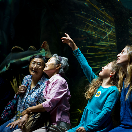 Guests point at enormous fish in the Amazon Flooded Forest tunnel