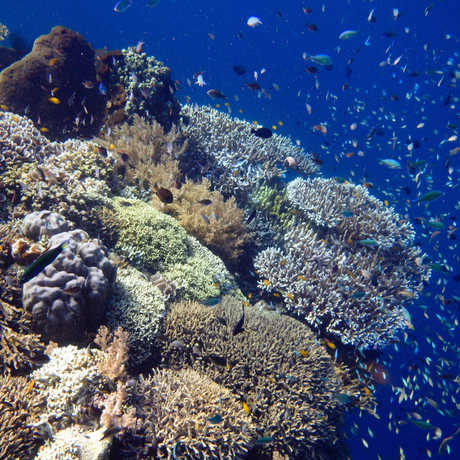Menjangan Island, Bali by rachel in wonderland