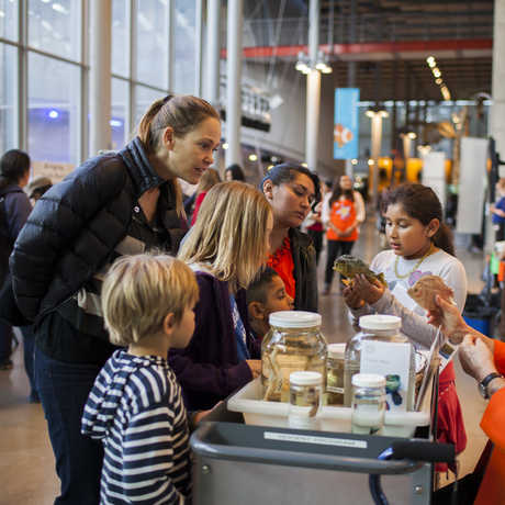 Families explore the California Academy of Sciences