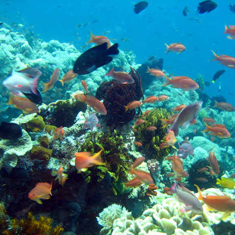 Colorful fish in the Philippine coral reef