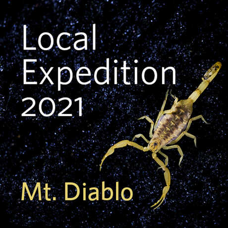 Local Expedition at Mount Diablo with scorpion on black background