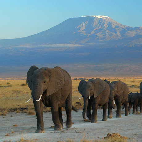 Elephants at Amboseli National Park