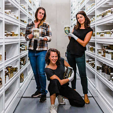The herpetology team in an aisle of collections