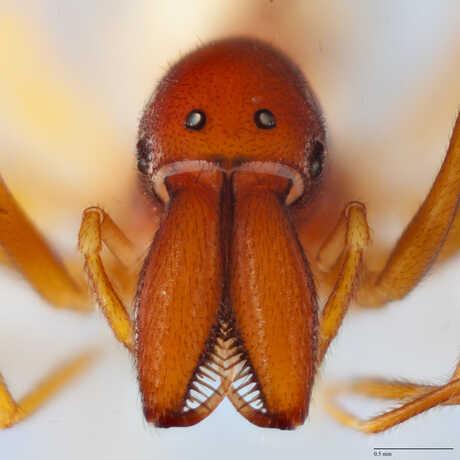 assassin spider image
