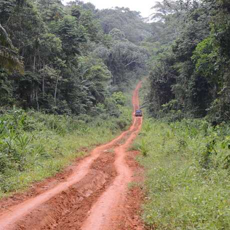 2013 expedition to southern Cameroon