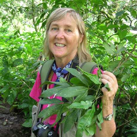 Photo of Meg Lowman