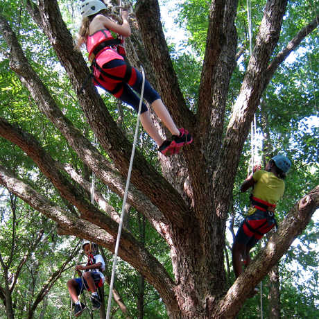 Photo of REU: Wheelchairs & Tardigrades In the Canopy