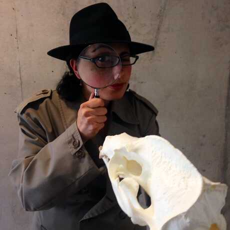 Person dressed as detective looks at animal skull with a hand lens
