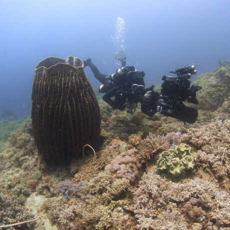 Academy diver with large camera swims past a giant sponge in the Philippines.