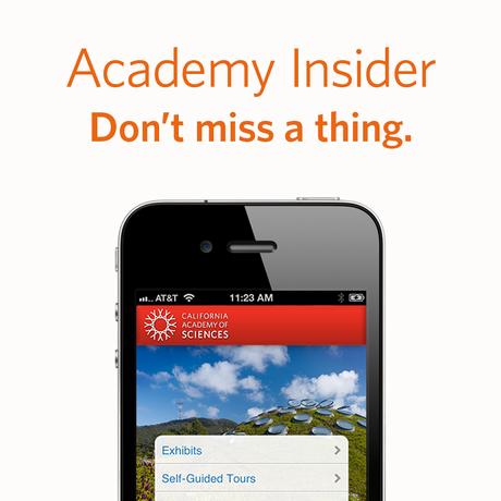 Logo for the Academy Insider mobile app