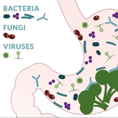 Gut Microbiome