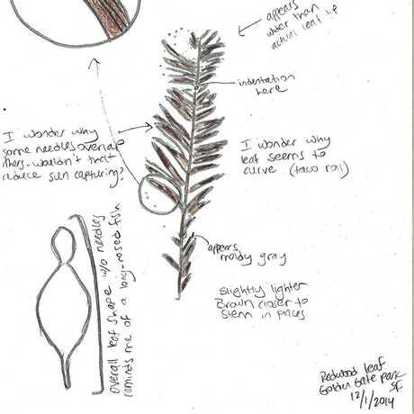 Leaf sketch5