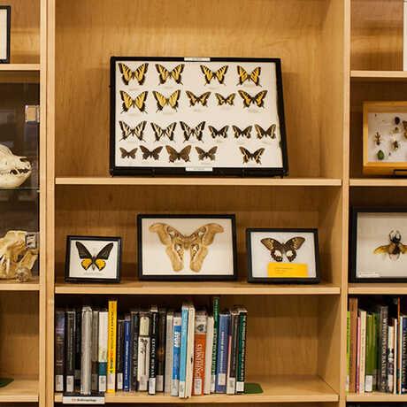 California Academy of Sciences Naturalist Center