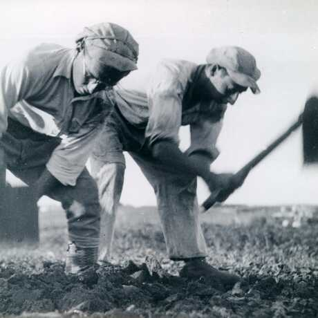 Two Men Plowing