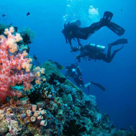 SCUBA divers in a coral reef