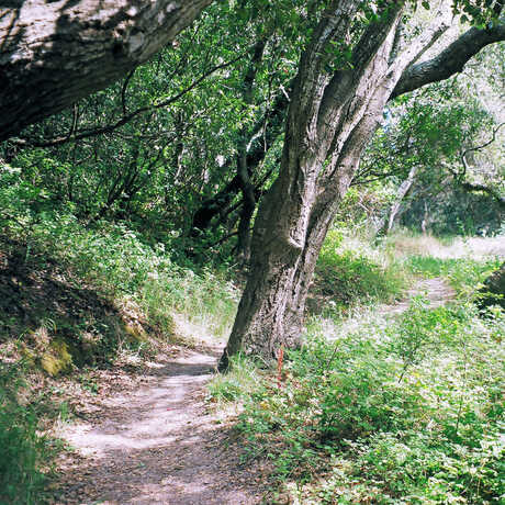 A shaded path winds through trees.