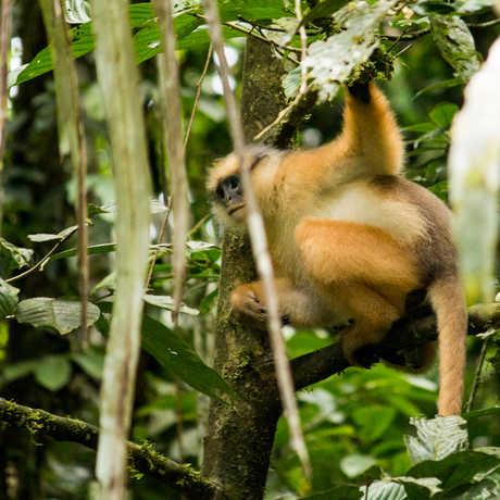 Jungle monkey