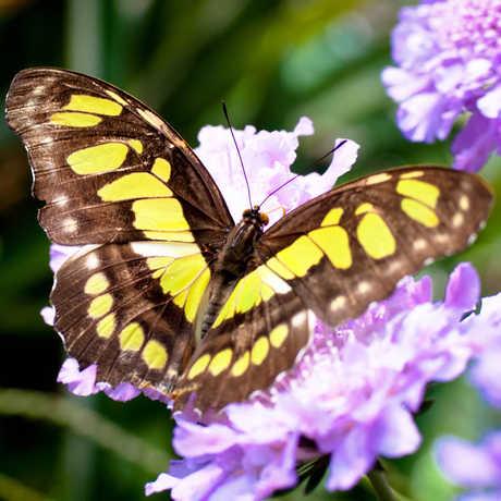 Butterfly_JeffDillon
