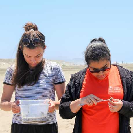 sand crabbing limpets interns