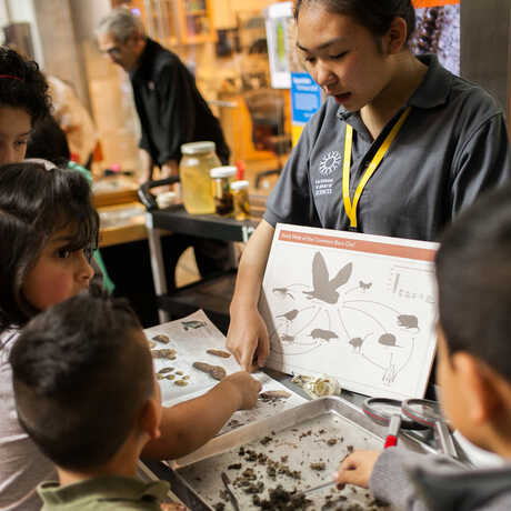 A high school interns shows students how to dissect owl pellets