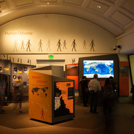 A view of the Human Odyssey exhibit, with visitors studying an interactive migration map.