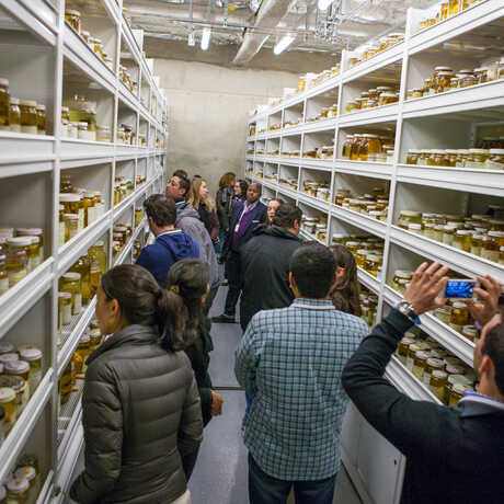 A group of Academy visitors explores our legendary specimen collections