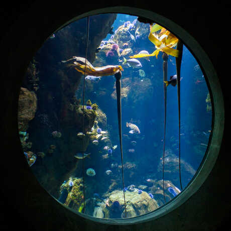 A large, round window presents an underwater view of the California Coast Kelp Forest.
