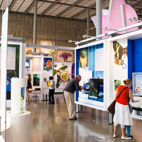 Guests exploring Color of Life exhibit