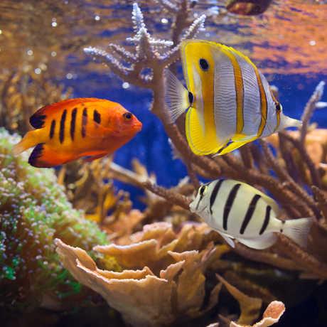 ReefFish