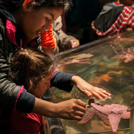 Children touching a starfish in the Discovery Tidepool touch tank.