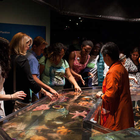 Academy visitors touch sea creatures at the Discovery Tidepool.