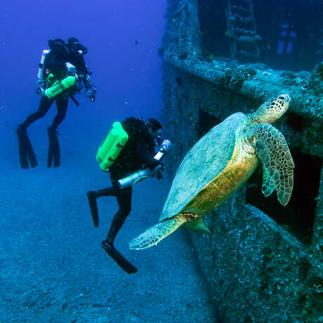 Two scuba divers with a sea turtle.