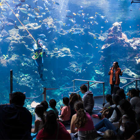 Presenter and diver in front of the Philippine Coral Reef viewing window