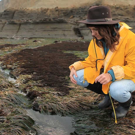 A Summer Systematics Institute intern surveys a tidepool.