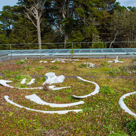 Bleaching Bones on the Living Roof