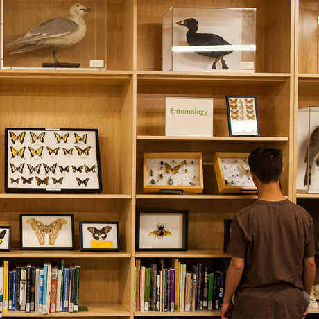 A visitor examines specimens at the Naturalist Center