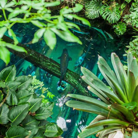 Osher Rainforest view