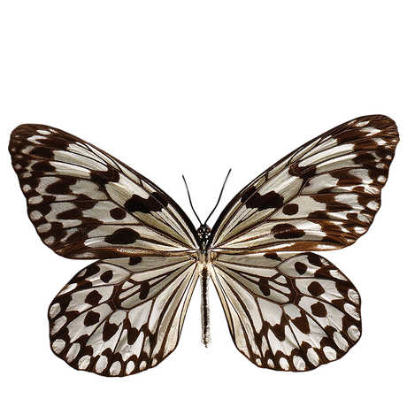 Photograph of silo butterfly
