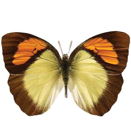 silo butterfly