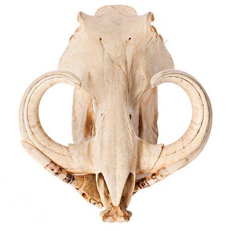 3D skull viewer