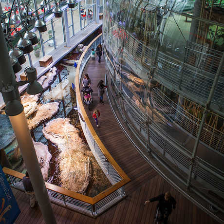 Overhead view of the Rainforests of the World dome.
